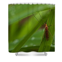 Squito Has Landed Shower Curtain by Karol Livote
