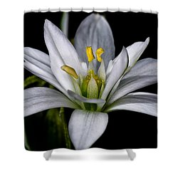 Star Of Bethlehem Shower Curtain by Lori Coleman