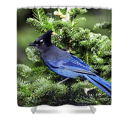Stellers Jay Shower Curtain by Sharon Talson