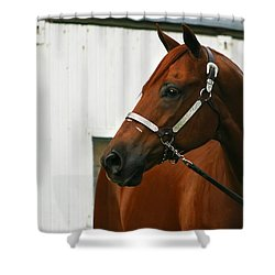 Stud Shower Curtain by Angela Rath