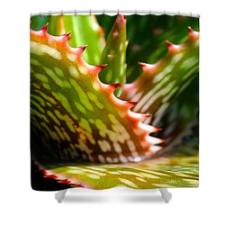 Succulents With Spines Shower Curtain by Judi Bagwell