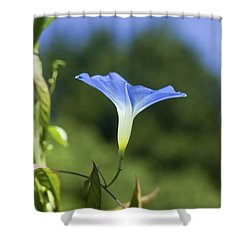 Sun On Morning Glory Shower Curtain by Rich Franco