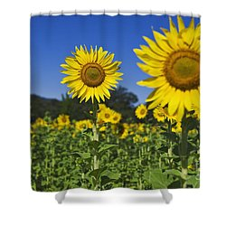 Sunflower Shower Curtain by Dennis Flaherty and Photo Researchers