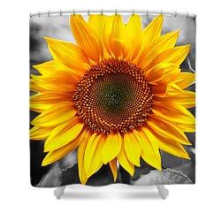 Sunflowers 3 Shower Curtain by Sumit Mehndiratta