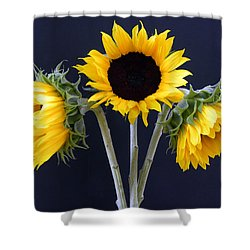 Sunflowers Three Shower Curtain by Sandi OReilly