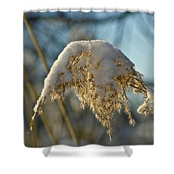 Sunny Day Snow Fall On The Bull Rushes Shower Curtain by LeeAnn McLaneGoetz McLaneGoetzStudioLLCcom