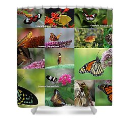 Sunshining Love Bugs Shower Curtain by Juergen Roth