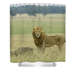 Surveying His Kingdom Shower Curtain by Michele Burgess