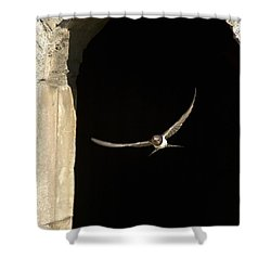 Swallow In Flight Shower Curtain by John Short