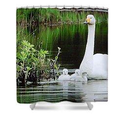 Swan Family Late Summer Shower Curtain by Colette V Hera  Guggenheim