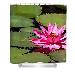 Sweet Pink Water Lily In The River Shower Curtain by Sabrina L Ryan