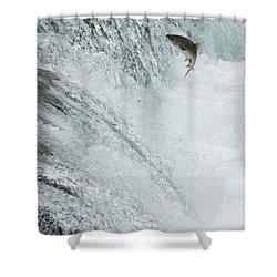 Swimming Upstream Shower Curtain by Gloria & Richard Maschmeyer