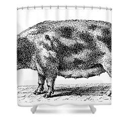 Swine Shower Curtain by Granger