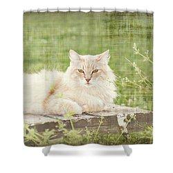 Tabitha  Shower Curtain by Susan Bordelon