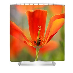 Take A Look Inside Shower Curtain by Heidi Smith