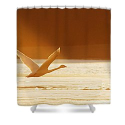 Takeoff At Sunset Shower Curtain by Larry Ricker