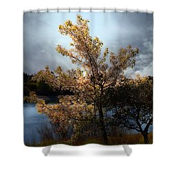 The Cherry Blossom Tree . 7d12703 Shower Curtain by Wingsdomain Art and Photography