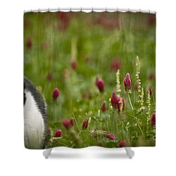The Clover Field Shower Curtain by Kim Henderson
