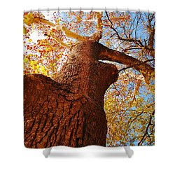 The Deer  Autumn Leaves Tree Shower Curtain by Peggy  Franz