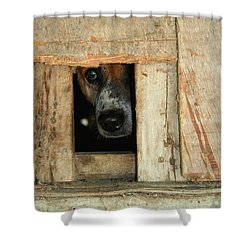 The Face Of Hoarding Shower Curtain by Nola Lee Kelsey