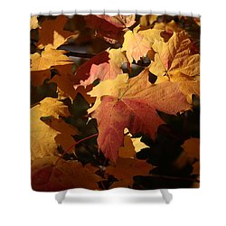 The Golden Days Of October Shower Curtain by Lyle Hatch