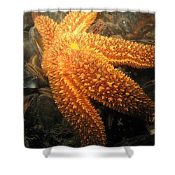 The Great Starfish Shower Curtain by Paul Ward