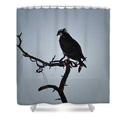 The Osprey Shower Curtain by Bill Cannon