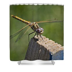 The Perch Shower Curtain by Priya Ghose