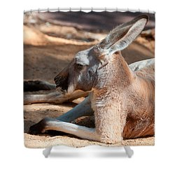 The Resting Roo Shower Curtain by Rob Hawkins