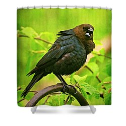 The Usurper Shower Curtain by Lois Bryan