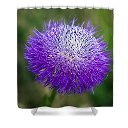 Thistle I Shower Curtain by Tamyra Ayles