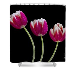 Three Of A Kind Shower Curtain by Susan Candelario