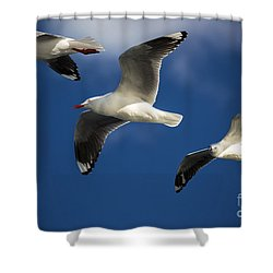 Three Silver Gulls Shower Curtain by Avalon Fine Art Photography