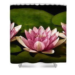 Three Water Lilies Shower Curtain by Susan Candelario