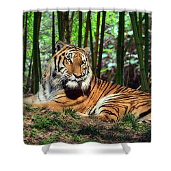 Tiger Rest And Bamboo Shower Curtain by Sandi OReilly