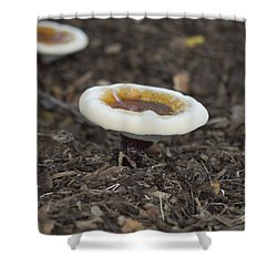 Toadstools Shower Curtain by Douglas Barnard
