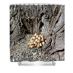 Toadstools In The Gravel Shower Curtain by Will Borden