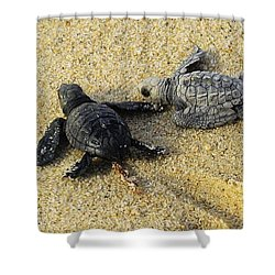 Tommy And Timmy Turtle Shower Curtain by John  Greaves