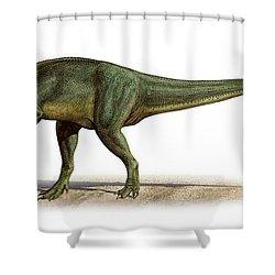 Torvosaurus Tanneri, A Prehistoric Era Shower Curtain by Sergey Krasovskiy