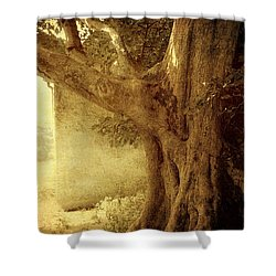 Touch Of History. Wicklow. Ireland Shower Curtain by Jenny Rainbow