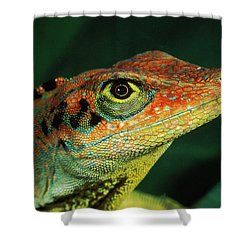 Transverse Anole Anolis Transversalis Shower Curtain by Murray Cooper