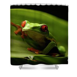 Tree Frog 10 Shower Curtain by Bob Christopher