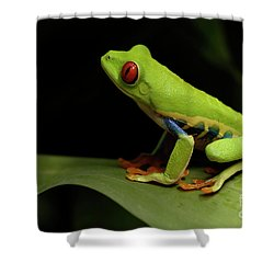 Tree Frog 14 Shower Curtain by Bob Christopher