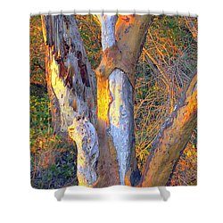 Tree In The Sunset Shower Curtain by Randall Thomas Stone