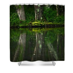 Tree Trunks Shower Curtain by Karol Livote