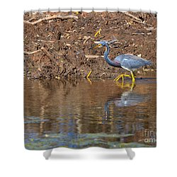 Tricolored Heron In The Winter Marsh Shower Curtain by Louise Heusinkveld
