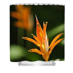 Tropical Orange Heliconia Flower Shower Curtain by Elena Elisseeva