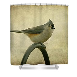 Tufted Titmouse II Shower Curtain by Sandy Keeton