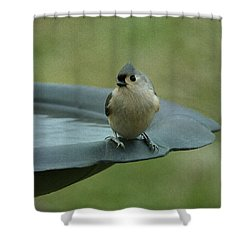 Tufted Titmouse Shower Curtain by Sandy Keeton
