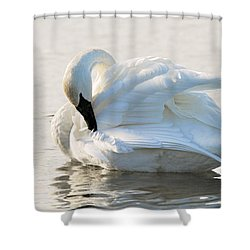 Tumpeter Swan Shower Curtain by Larry Ricker